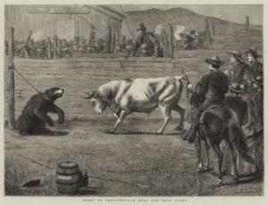 taureau - bull market